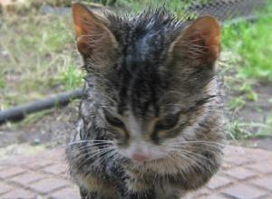 Целую спасательную операцию провели ради спасения тонущего маленького котенка в Кисловодске