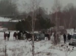 Спасатели вызволяли провалившуюся под лед лошадь на Ставрополье