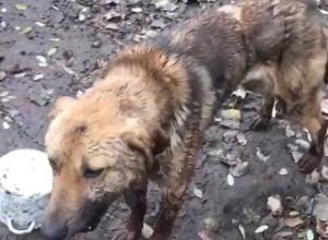 Охранник зоопарка в Пятигорске жестоко избил сторожевого пса металлическим прутом