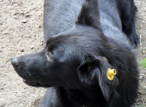 В Кисловодске начали отлавливать бездомных животных