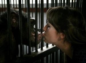 Защитники животных обвинили ставропольский зоопарк в смерти шимпанзе Малевича