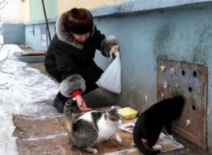 «Открывать подвалы для кошек нельзя», - ставропольцы категорически не согласились с федеральным депутатом