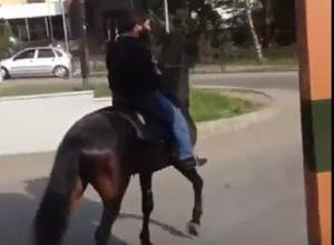 На конях в «Макдональдс» прискакали двое жителей КЧР в Пятигорске