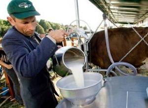 На новый вид гранта для молочников выделили 70 миллионов рублей на Ставрополье