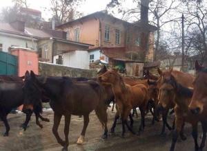 По центру Кисловодска пронесся табун лошадей