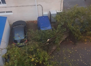 Рухнувший тополь повредил машины и выбил окно во дворе многоэтажки в центре Ставрополя