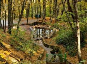 «Гуляйте на здоровье!»: минприроды опровергло свою информацию о запрете на прогулки в ставропольских лесах