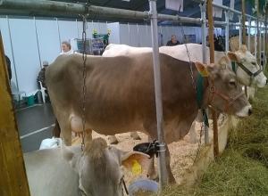 Тонны высококачественного молока будут производить на новой ферме в Ставропольском крае