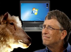 Овцеводы и козоводы создали ставропольский ответ американской Windows