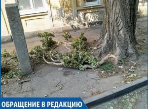 «В самом центре города сухие ветки падают людям на головы», - жительница Ставрополя