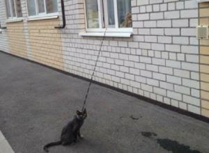 Необычный способ выгуливать кота придумали жители многоэтажки Ставрополя