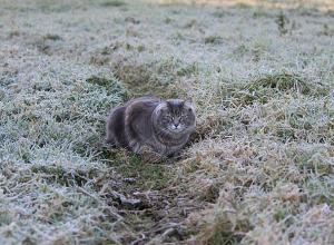 МЧС: ночные и утренние заморозки ожидаются в ближайшие сутки на Ставрополье