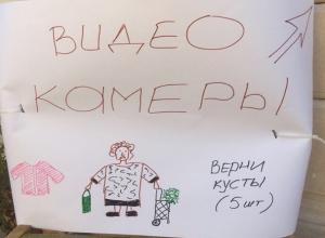 «Помогите найти рецидивистку, скоро она унесет мой пятиметровый орех», - житель Буденновска