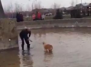 Трогательное спасение упавшей в фонтан собаки попало на видео под Ставрополем
