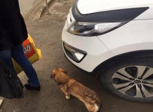 Паркуюсь как хочу: иномарка с краснодарскими номерами загородила пешеходам проход в северо-западном районе Ставрополя