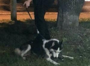 Собака грызла котенка на глазах у прохожих на Ставрополье