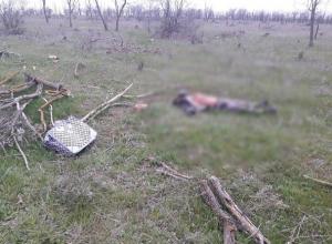 Полусгнившее тело неизвестного мужчины нашли у трассы в Ставропольском крае