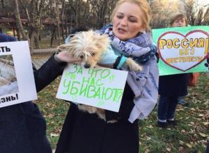 Ставропольчане потребовали ужесточения статьи УК за издевательство над животными