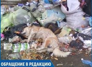 На несанкционированной свалке в центре Михайловска неизвестные оставили тело мертвой собаки