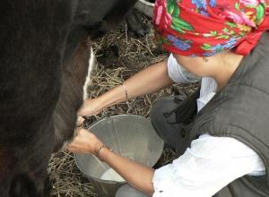 Производство молока и мяса упало в Ставропольском крае