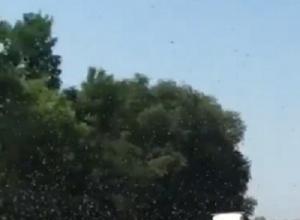 Полчища саранчи на Ставрополье попали на видео