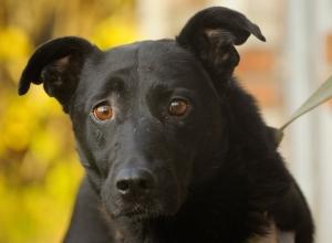 Неизвестный оставил собаку привязанной к дереву на территории лесополосы в Кисловодске