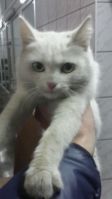 Кошка-путешественница прокатилась под бампером авто из Ставрополя в Невинномысск