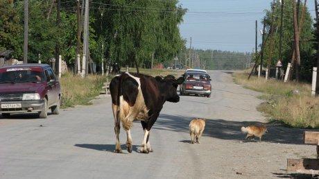 На Ставрополье «Опель» врезался в корову: двое находятся в больнице