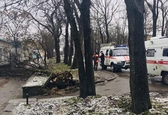 Женщина пострадала в результате падения дерева в Ставрополе