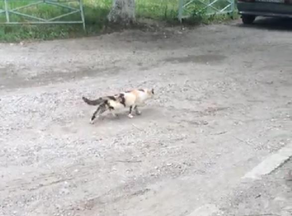 Дети-живодеры из Пятигорска сломали кошке позвоночник булыжником