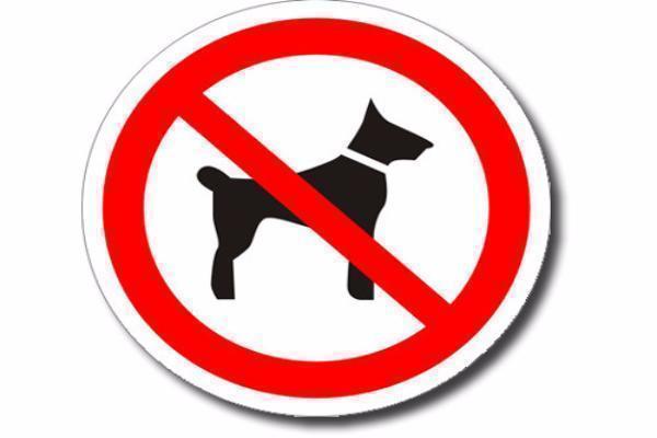 Для отлова бродячей собаки в магазине Кисловодска пришлось вызывать службу спасения