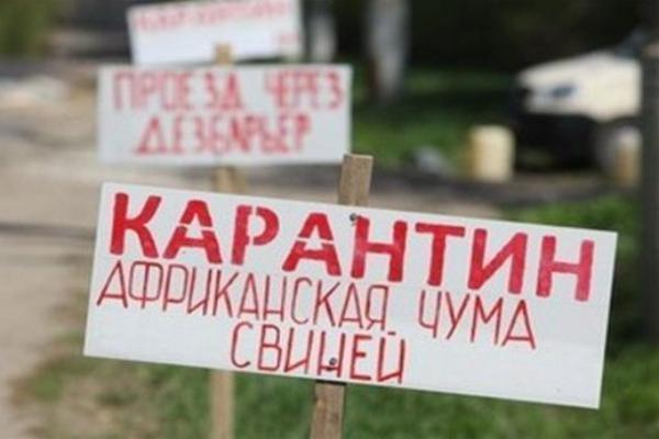 Ввоз свинины наСтаврополье запретят из-за чумы