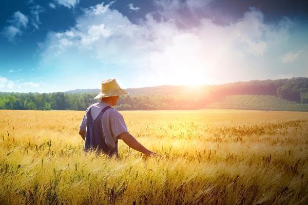 НаСтаврополье снизят минимальный размер выделяемых сельхозземель