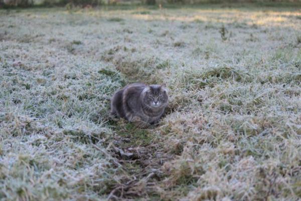 НаСтаврополье предполагается резкое похолодание
