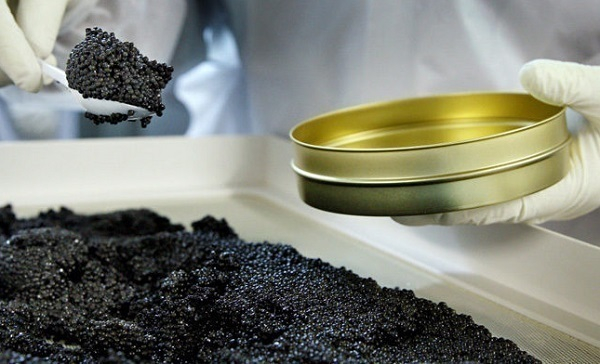 НаСтаврополье инвестируют 700 млн. руб. впроизводство рыбы иикры