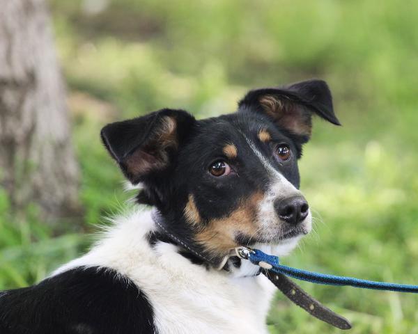Собака Лилу с трудной судьбой ищет дом