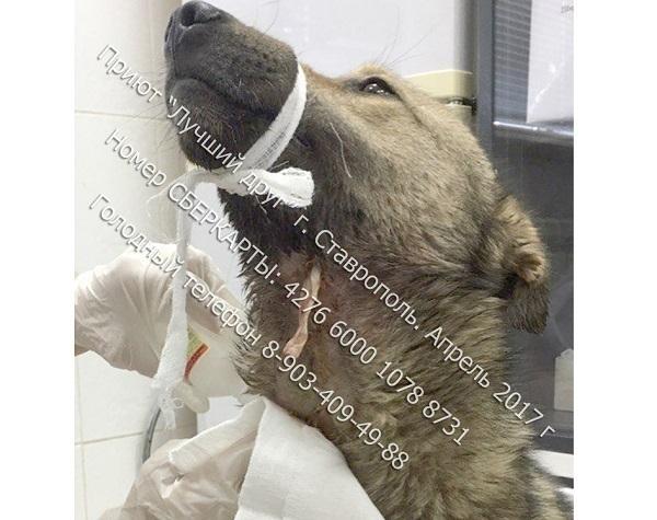 Граждане Ставрополя спасли собак, которых хотели пустить нашашлык