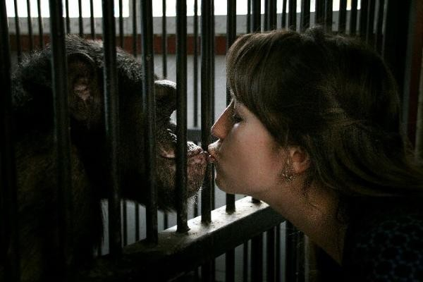 Зоозащитники обвинили руководство ставропольского зоопарка в смерти циркового шимпанзе