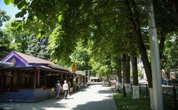 В Пятигорске пройдет проверка состояния деревьев