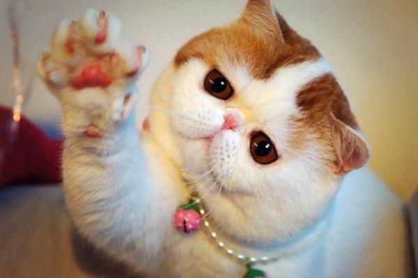 ВКисловодске лечить людей будут спомощью кошек