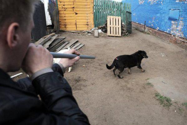 Бездомных животных уничтожили на глазах горожан с разрешения администрации района Ставрополья
