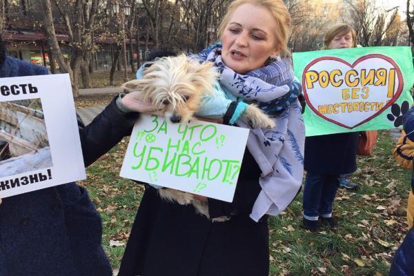 Жители России массово начали требовать ужесточения наказания заиздевательства над животными