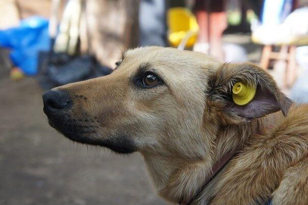 Неизвестный спонсор на Ставрополье помогает бродячим животным