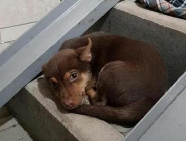 Грустный брошенный щенок в подземном переходе расстрогал жителей Ставрополья