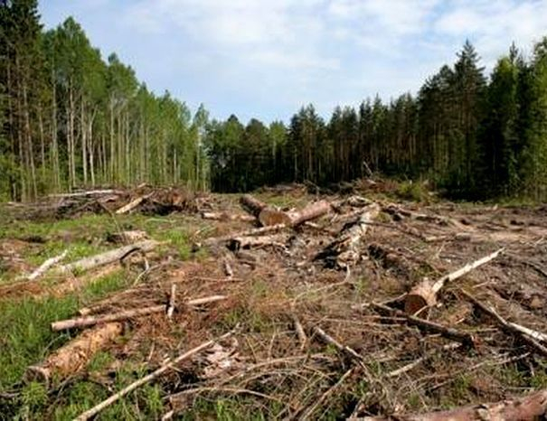 Власти уменьшили территорию городских лесов ради земельных участков в Кисловодске