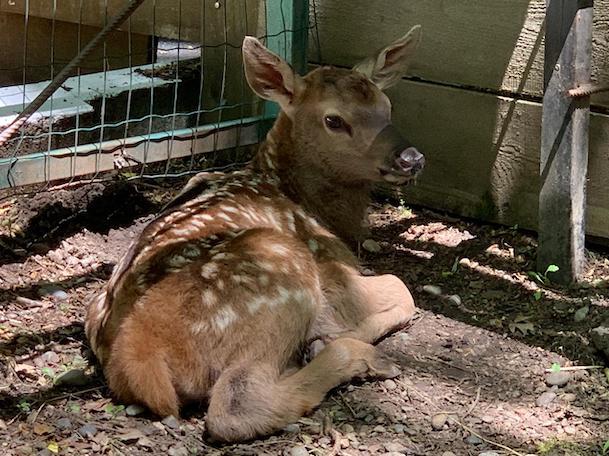 Страусята эму и олененок родились в зоопарке ставропольского парка Победы
