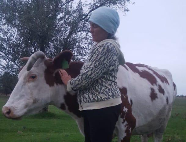 «Нас взяли и уничтожили», — ставропольские селяне отказываются убивать своих животных