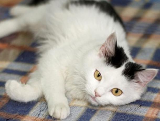 Кошка Олли из приюта «Лучший друг» ищет свой дом