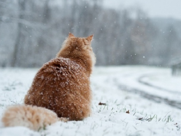 Туман и дождь со снегом ждут ставропольцев в субботу