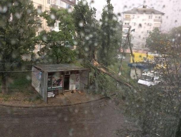 Дерево рухнуло после бури в Ставрополе — к месту прибыла «скорая»